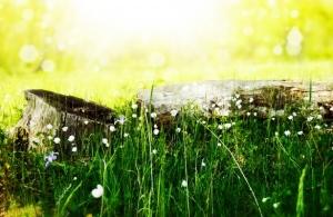 flower-meadow