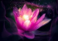 flower-3103636_1920